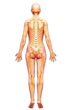 Thermografisch onderzoek van het hele lichaam