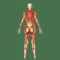 consult fibromyalgie